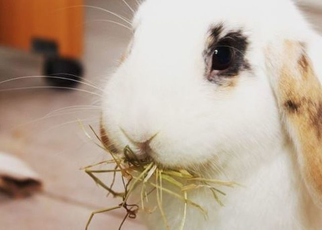 The bunny is very hungry. Bunny  Canon Eos650d Bunnylove Bunnys Coniglionano Lapin Bunnys Bunniesofinstagram Bunniesworldwide