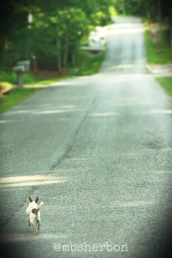 Travel Freedom Dog Explore Roadtrip Tennessee On The Road Mountains Wideopenspaces Eye4photography