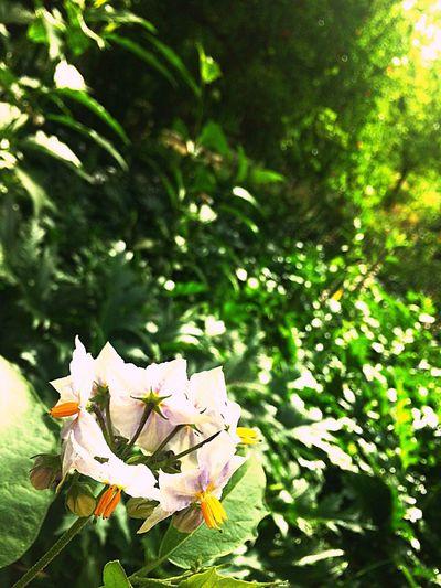 EyeEm Flower Nature Petal Fragility Beauty In Nature Plant Green Color Tranquility Beauty In Nature Love ♥ First Eyeem Photo Green Color 😍😌😊 😚 Nature🌳 Mountain🌄 Lovelike Iphone5s Photography Green Plant Growth Sevilla ViajesFamiliares💞👨👩👧👦
