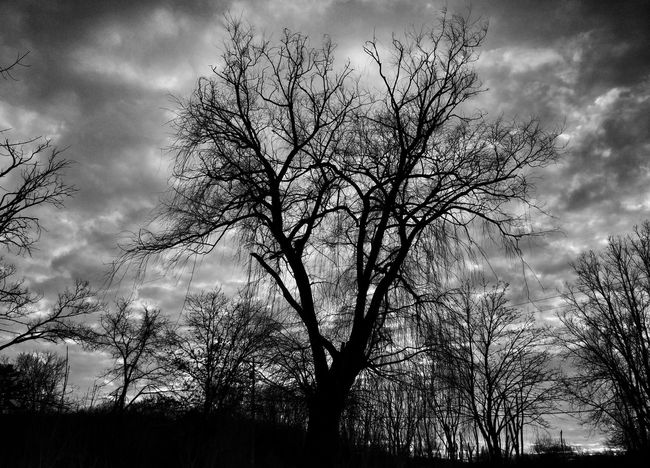 Blackandwhite Photography Nature Trees Winter Outdoors Taking Photos Check This Out Enjoying Life Loveit Likeit Follow4follow Commentbelow Thanks For The Love