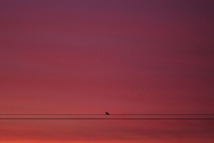 Low angle view of bird perching on cable against orange sky