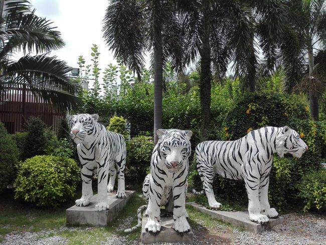 Tree Tiger Art And Craft Day No People Big Cat Nature Animal Wildlife Animal Outdoors Animal Themes White Tiger Creativity Growth