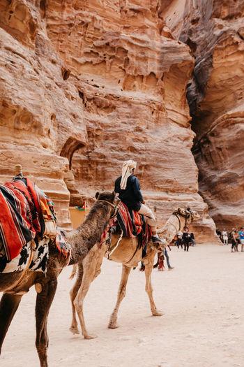 Full length of horse on desert