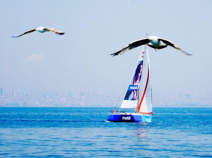 Prince Islands Sailing Boat Sailing Sailboat Seagulls Prinkipo Büyükada Turkey