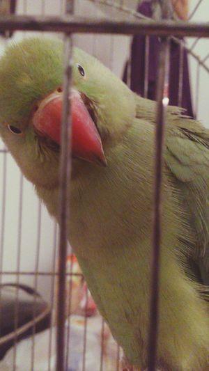 Parrot Parrot Lover Myparrot EyeEm Birds Birds