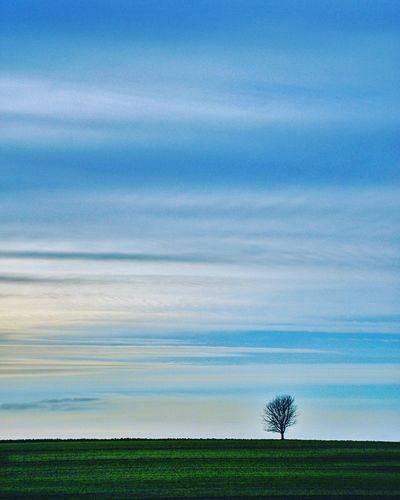 Lonely tree Sky
