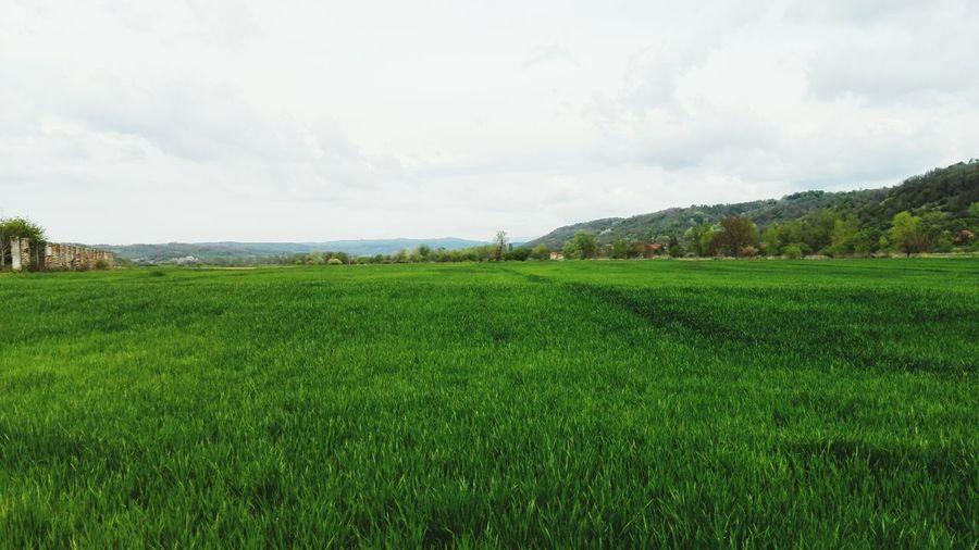 Landscape Rural Scene Nature Agriculture
