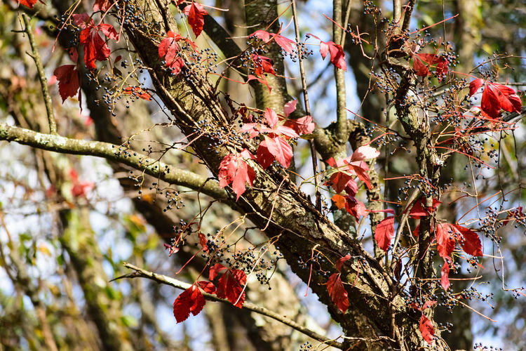 Autumn Beauty In Nature Branch Catkin Close-up Cold Temperature Day Fall Flower Fragility Freshness Growth Low Angle View Nature No People Outdoors Red Rose Hip Snow Tree Twig Winter