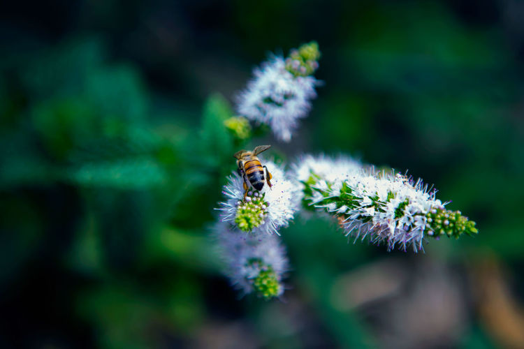 Animal Themes Animals In The Wild Bee Beginnings Botany Close-up Depth Of Field Flower Flower Head Focus On Foreground Fragility Freshness Growing Insect Nature New Life One Animal Petal Pollination Selective Focus Wildlife Zoology