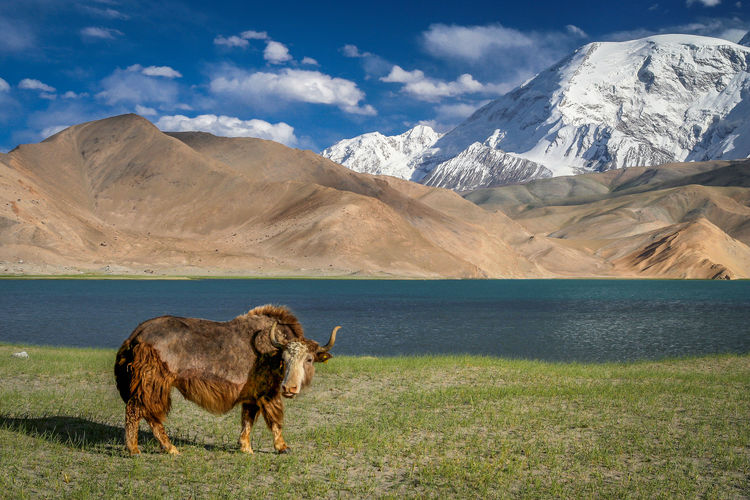 View of a horse on field against mountain range