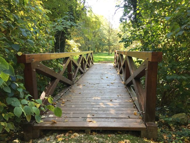 Beauty In Nature Bridge Leaf Nature No People Outdoors Plant Tree Wood - Material