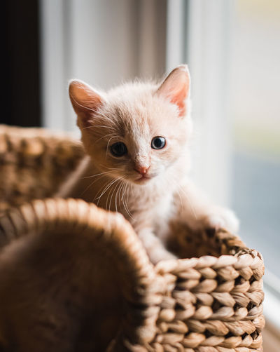Close-up of kitten in basket at home