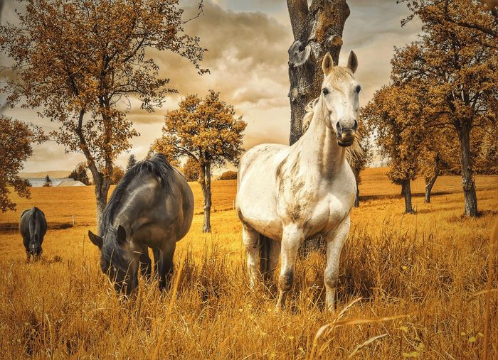 Horses On Grassy Field During Autumn