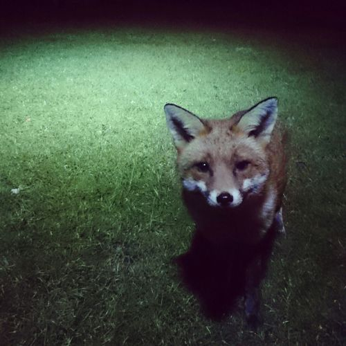 Check This Out Hello World Foxy Playing With The Animals