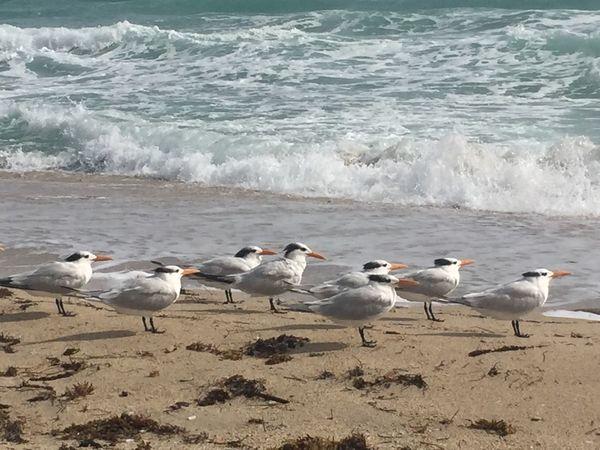 Sea Beach Beauty In Nature Bird Water Beautiful Day Tranquil Scene