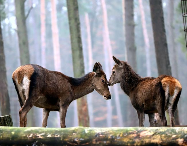 Side view of two horses in the forest