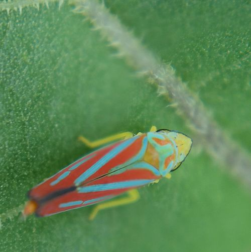 Close-up of multi colored swimming underwater