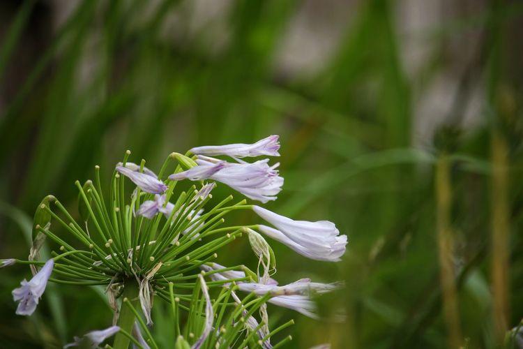 色褪せてたな。 Flower Flower Head Insect Leaf Living Organism Close-up Plant