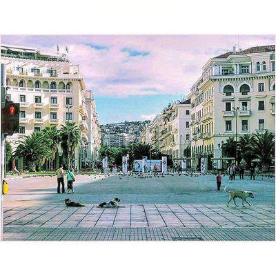 Thessaloniki Θεσσαλονίκη Solun Salonika Greece VisitGreece Instagreece Greecestagram White City Whitecity Dogsofgreece