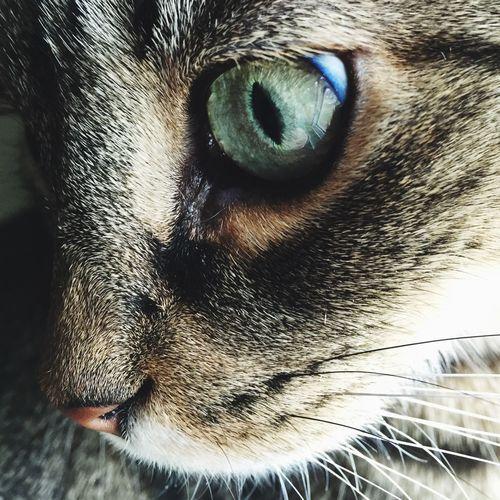Close-up of cat eye