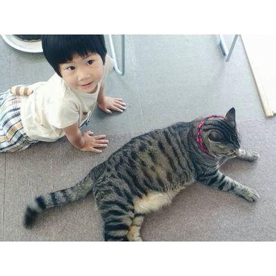 おはようございます🌻 . 早いもので今日から8月 毎日のうだるような暑さで、人も猫ものびのびです... . 8月はわたしの誕生月でもあります♩ 夏生まれなのに、年々暑さに弱くなってます、、💧 . . 今月もどうぞよろしくお願いします♡ 猫と子供 ねこ部 にゃんだふるらいふ 猫さんとの生活 にゃんこig_cat cat_stagram vscocam vscocat 3歳きんたろう 男の子2歳9ヶ月息子ig_kidsphoto kids_stagram ig_kidsきんたかんた仲良し8月August猫 world_kawaii_cat
