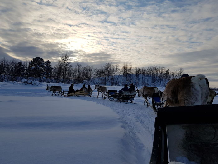 Reindeer Centre Sleighride Snow Tree Cold Temperature Winter Water Rural Scene Group Of Animals