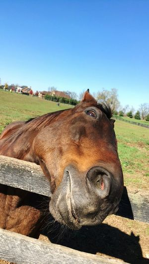 Another day visiting old friends Happy Horse Head Tilt Horse Photography  Horses Horse Life Horse Snout