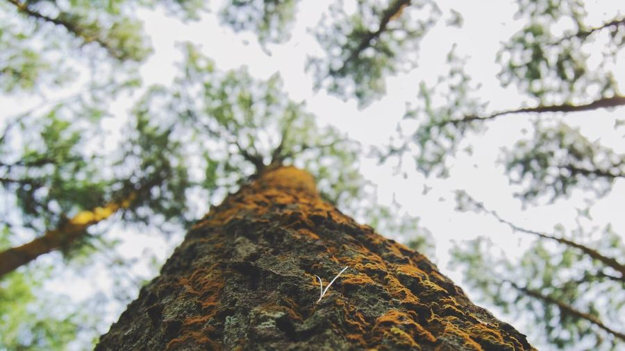 Vacations Beauty In Nature Day EyeEmNewHere Travel Destinations Tree Nature Tree Trunk Low Angle View Branch Outdoors
