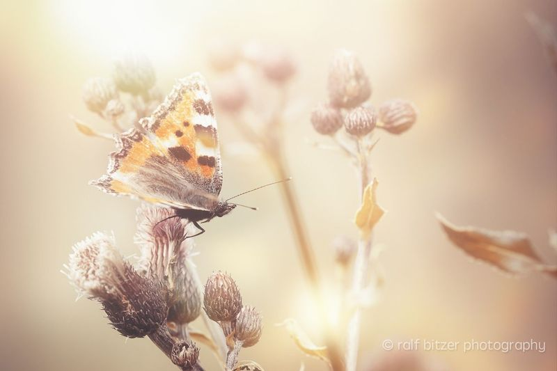 Insect Nature Flower Animal Themes Fragility Beauty In Nature Freshness One Animal Wildlife Plant No People Close-up Growth Pollination Animal Buzzing Day Bee Outdoors
