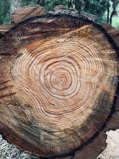 Tree Tree Ring Close-up Day Wood - Material Bark Plant Cross Section Pattern Nature Wood Tree Stump Brown Timber Circle Geometric Shape Textured  Shape