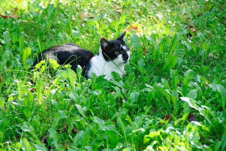 Cat lying on grassy field