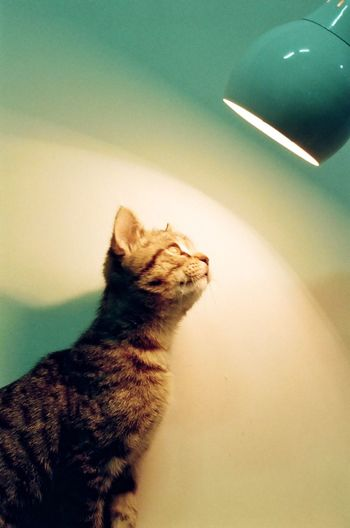 Film Photography Filmisnotdead Analogue Photography Cat Indoors  Pet Nature Light Light And Shadow Capture The Moment Gaze Cozy