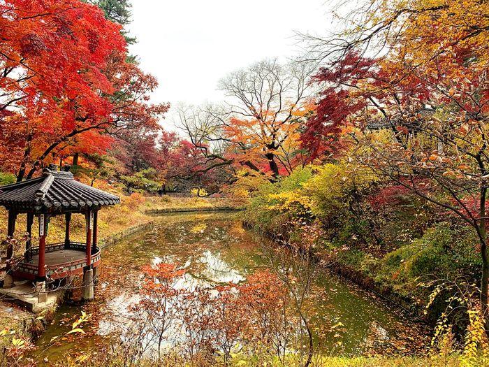 人生短短幾個秋 Spring