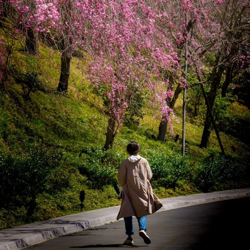 Rear view of man walking on footpath by road