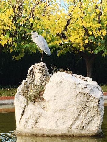 Heron Grey Heron  Water_collection Water Nature