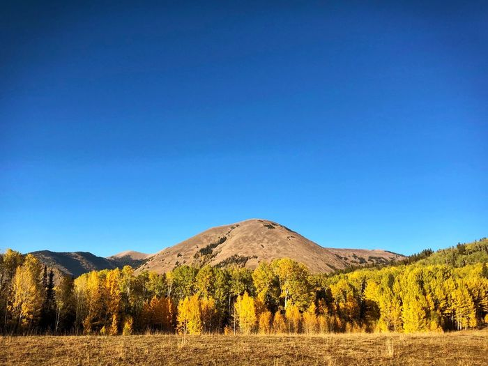 Clear Sky Golden Hour Golden Aspen Autumn colors Autumn Fall Sky Blue Scenics - Nature Landscape Land Tranquil Scene Clear Sky Mountain Beauty In Nature Nature Field Sunlight Copy Space Tranquility Environment No People Non-urban Scene