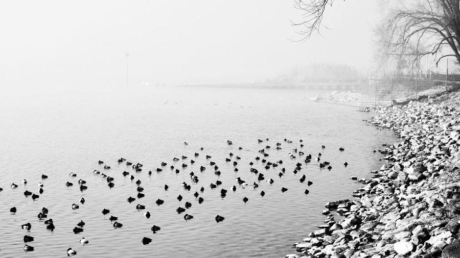 Flock of birds in sea against sky