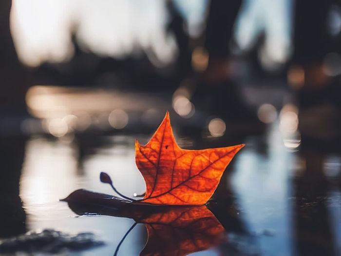 Close-up of orange leaf on water
