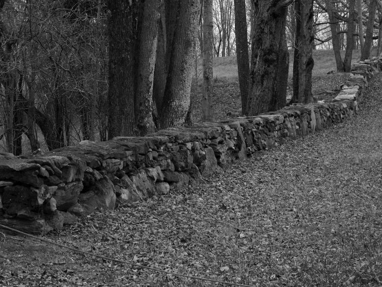 Stone Wall Check This Out Naturelover Black And White Collection  Black And White Photography Black And White Nature Blackandwhite OpenEdit Nature On Your Doorstep Manmade Revolutionary War From Where I Stand Stonework Stonewall Stonestructures Treescape New England's Endless Beauty! New England Nature