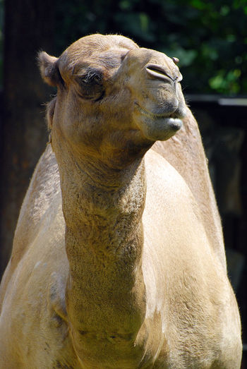 Camel One