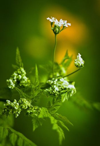 Animal Themes Animals In The Wild Beauty In Nature Close-up Day Flower Flower Head Fragility Freshness Green Color Growth Nature No People Outdoors Plant