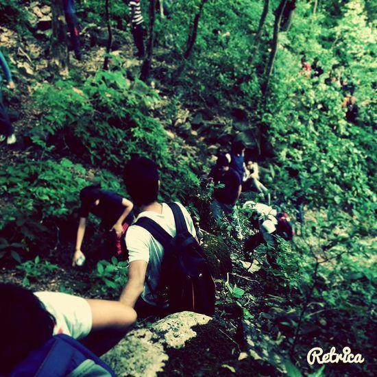 Trekking Forest Path Teamwork Dayout