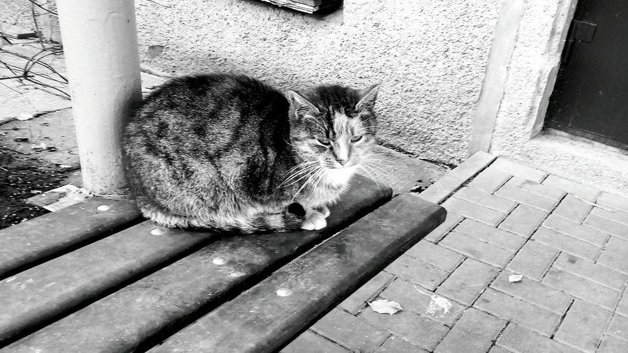 Pet Photography  Pet Portraits Pets Animal Themes Feline Cats 🐱 Cat♡ Cats Of EyeEm Catsofinstagram Catsagram Cat Lovers Kitty Love♥ Kitty Cats  Kitty!  Blackandwhite Black & White Blackandwhite Photography Black And White