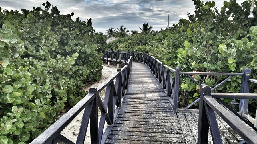 Take me to the bridge Caribbean Walkway The Way Forward August Lush Foliage Beauty In Nature Diminishing Perspective Scenics Tourism No People Cuban Resorts Bridge - Man Made Structure To The Bridge Footbridge Tranquility Island in Santa Maria Cuba