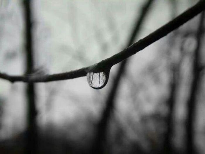 Steigerwaldstadion Rain Tree
