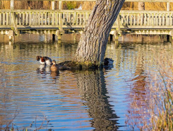 Reflection Lake Bird Water Duck Outdoors Tree