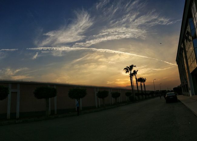 Sky Sunset Tree Palm Tree Outdoors Cloud - Sky Snapseed Oneplus3 Collage Faculty Of Engineering Shotononeplus Nature
