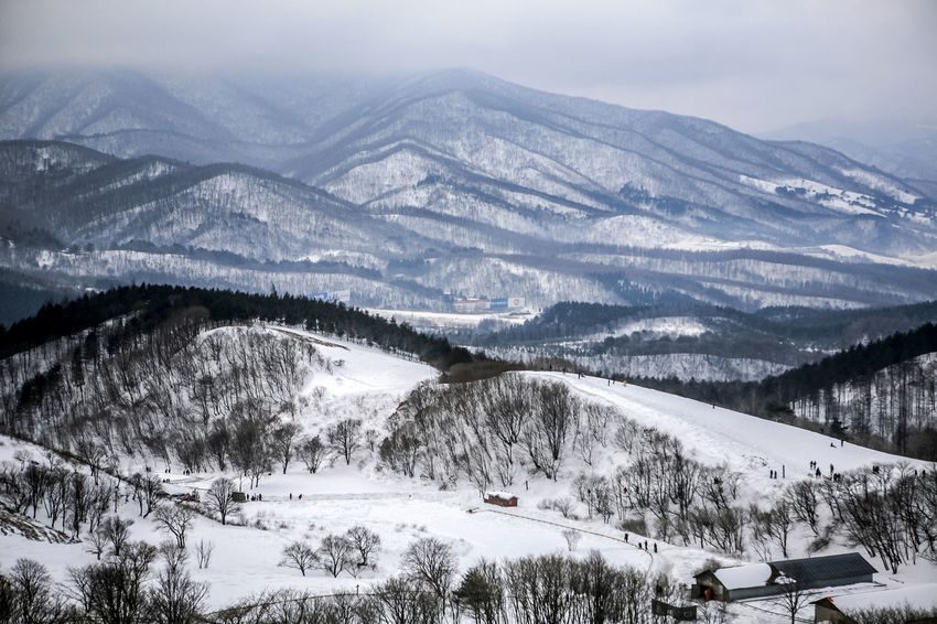 Cloudy Cold Cold Temperature Covering Daegwanryung Food Frozen Gangwondo High Altitude Landscape Mountain Mountain Range Physical Geography Rural Landscaped Scenics Season  Sheep Ranch Snow Snow Covered Snowcapped Snowcapped Mountain Tranquil Scene Unhampered Weather Winter