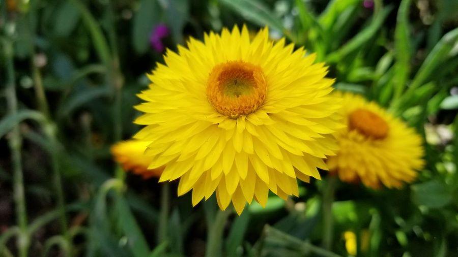 In Bloom Botany