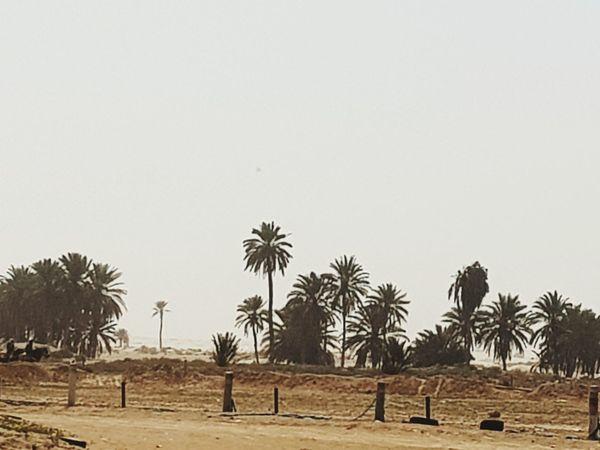 Tunisie Terre D'accueil Tunisia <3 Tunisia❤ Tunisia_with_love Tozeur, Tunisia Tozeur Tunisie El Faouar Tunisie El Faouar Tunisia Palmtrees Palm Leaf Palm Tree Tunisia Palm Plams🌴 Kebilli Tunisia❤ Kebili